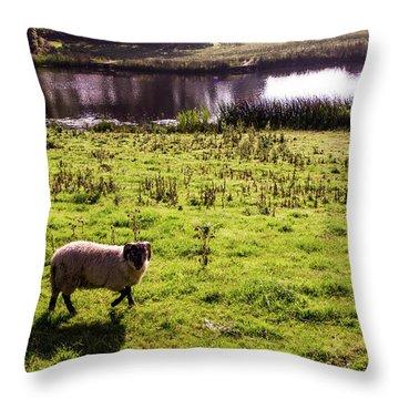 Sheep In Eniskillen Throw Pillow