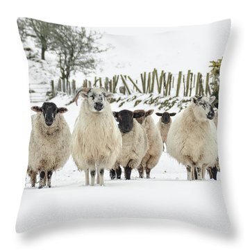 Sheep In Snow Throw Pillow