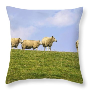 Sheep On Dyke Throw Pillow by Patricia Hofmeester