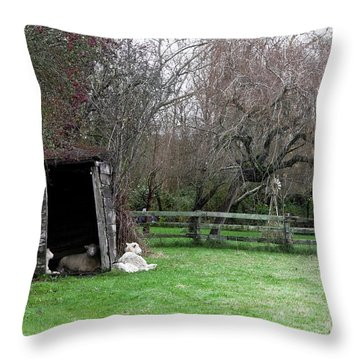Sheep Shed Throw Pillow by Lorraine Devon Wilke