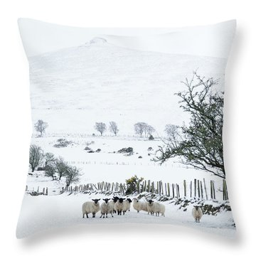Sheep Shelter  Throw Pillow