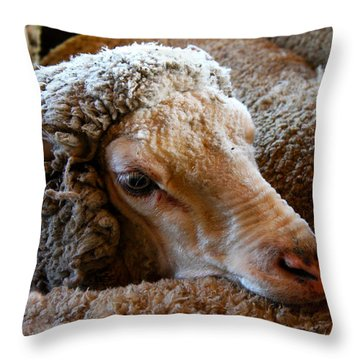 Sheep To Be Sheared Throw Pillow by Susan Vineyard