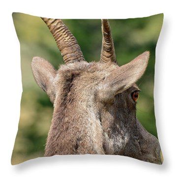 Throw Pillow featuring the photograph Sheepish Look by Bruce Gourley