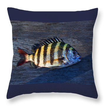 Throw Pillow featuring the photograph Sheepshead Fish by Laura Fasulo