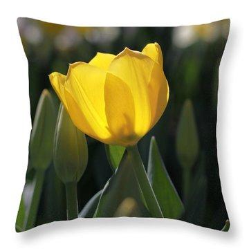 Sheer Yellow Throw Pillow