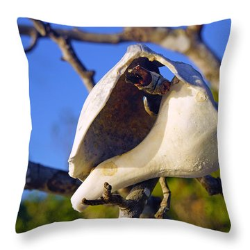 Shell On Brach Of Mangrove Tree At Barefoot Beach In Napes, Fl Throw Pillow