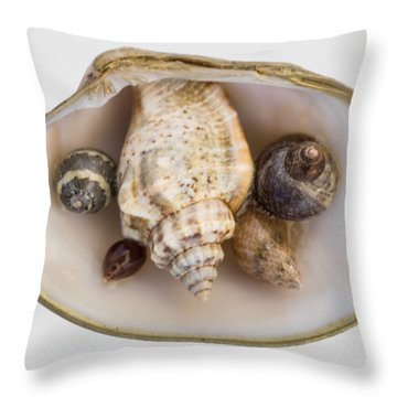 Shells Within A Sea Shell Throw Pillow