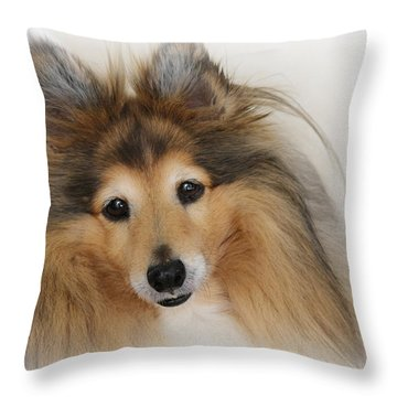 Sheltie Dog - A Sweet-natured Smart Pet Throw Pillow
