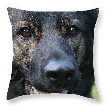 Shepherd Closeup Throw Pillow by Karol Livote