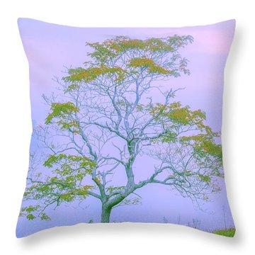 Australian Landscape Throw Pillows