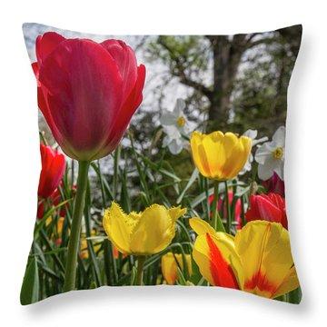 Throw Pillow featuring the photograph Sherwood Gardens 17 by Chris Scroggins