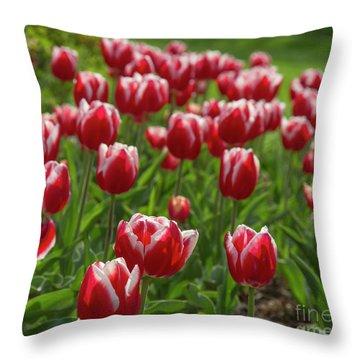 Throw Pillow featuring the photograph Sherwood Gardens 19 by Chris Scroggins