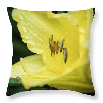 Throw Pillow featuring the photograph Shielded From The Rain by Christi Kraft