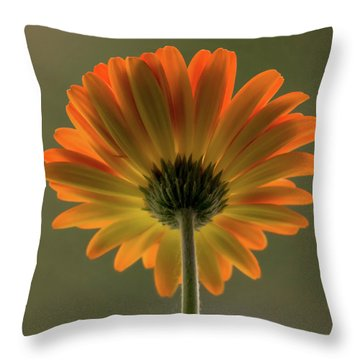 Shine Bright Gerber Daisy Square Throw Pillow by Terry DeLuco