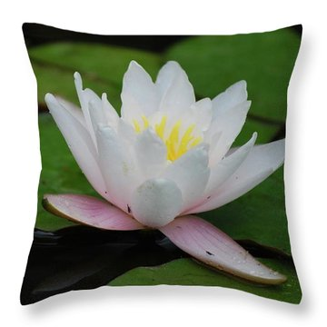 Throw Pillow featuring the photograph Shining Bright by Amee Cave