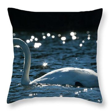 Throw Pillow featuring the photograph Shining Swan by Michelle Wiarda