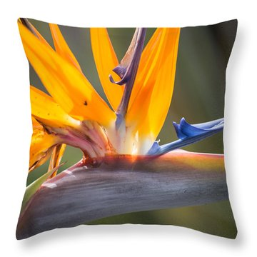 Throw Pillow featuring the photograph Shocktop by Julie Andel