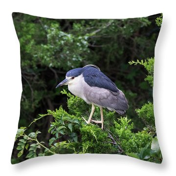 Shore Bird Roosting In A Tree Throw Pillow