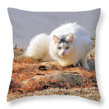 Shore Kitty Throw Pillow by Debbie Stahre