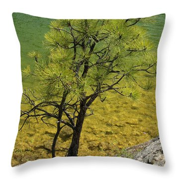 Shoreline Ponderosa Throw Pillow