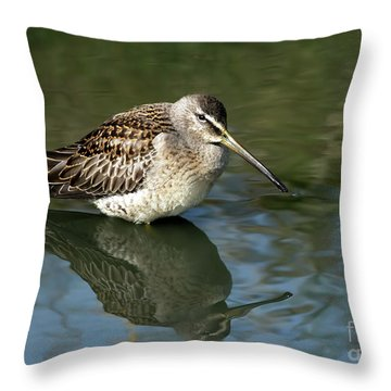 Throw Pillow featuring the photograph Short-billed Dowitcher by Sharon Talson