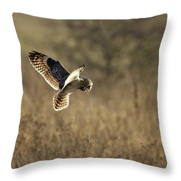 Short-eared Owl About To Strike Throw Pillow