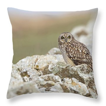 Short-eared Owl In Cotswolds Throw Pillow