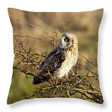 Short-eared Owl In Tree Throw Pillow