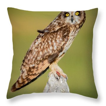Short Eared Owl Throw Pillow