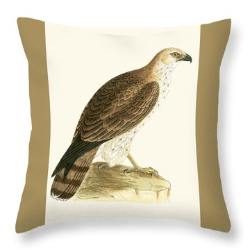 Short Toed Eagle Throw Pillow by English School