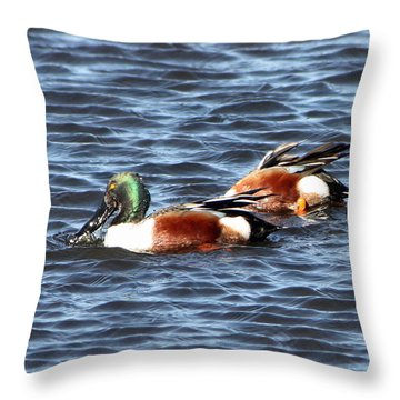 Shoveler Duck 1 Throw Pillow