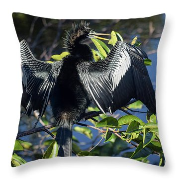 Show Drying Throw Pillow
