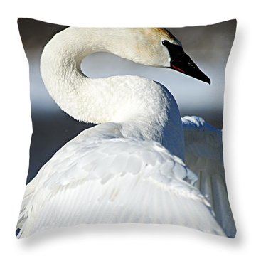 Showing Off Throw Pillow by Larry Ricker