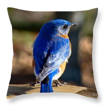 Showing Off My Beautiful Blue Feathers In The Sunlight Throw Pillow