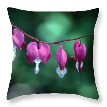 Showy Bleeding Hearts  Throw Pillow by Laurie Paci