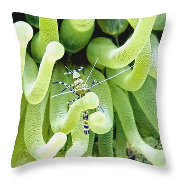 Shrimp And The Anemone Throw Pillow by Amy McDaniel