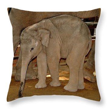 Shy Baby Elephant Throw Pillow