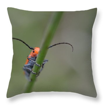 Shy Beetle Throw Pillow