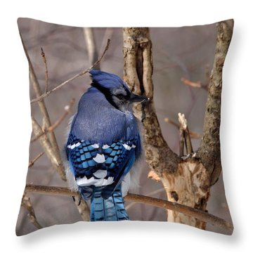 Shy Blue Jay  Throw Pillow by David Porteus