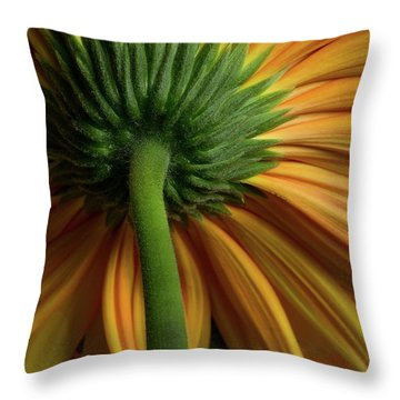 Shy Daisies Throw Pillow