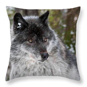 Shy II Throw Pillow