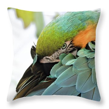 Shy Macaw Throw Pillow