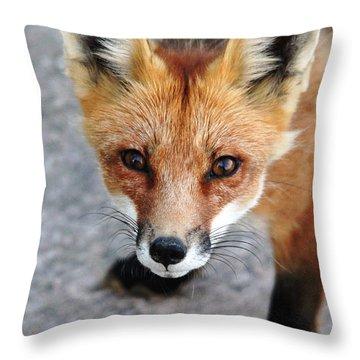 Shy Red Fox  Throw Pillow by Debbie Oppermann