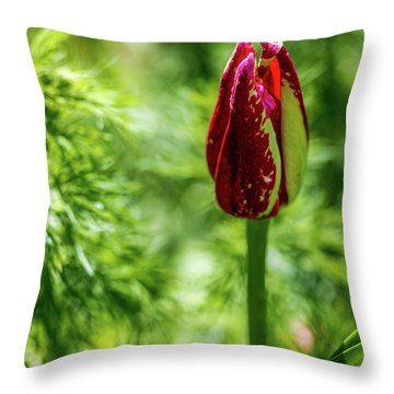 Shy Tulip Throw Pillow