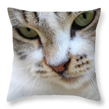 Throw Pillow featuring the photograph Shyness by Munir Alawi