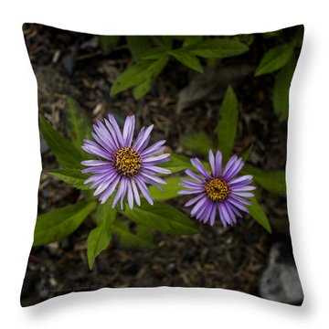 Siberian Aster Throw Pillow