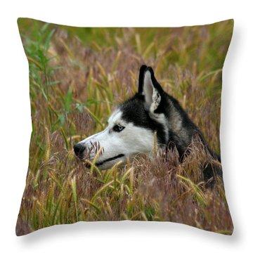Siberian Husky 38 Throw Pillow