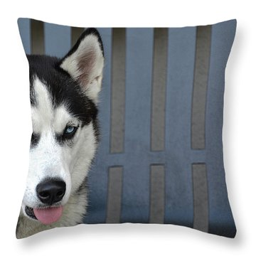 Throw Pillow featuring the photograph Siberian Husky  by Renee Anderson