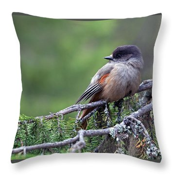 Siberian Jay Throw Pillow