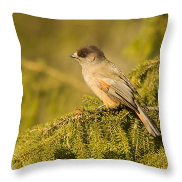 Siberian Jay Perisoreus Infaustus Throw Pillow by Gabor Pozsgai